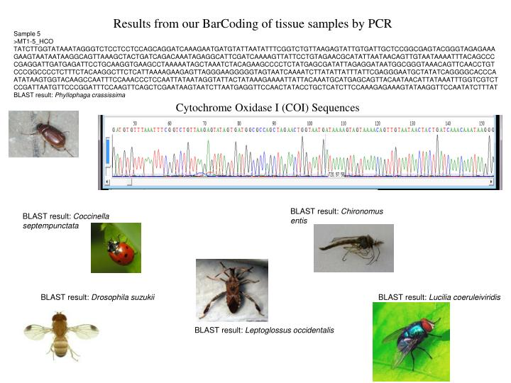 Results from our BarCoding of tissue samples by PCR