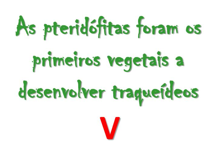 As pteridófitas foram os primeiros vegetais a desenvolver traqueídeos