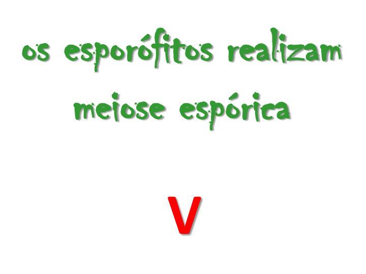 os esporófitos realizam