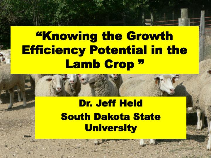 knowing the growth efficiency potential in the lamb crop n.