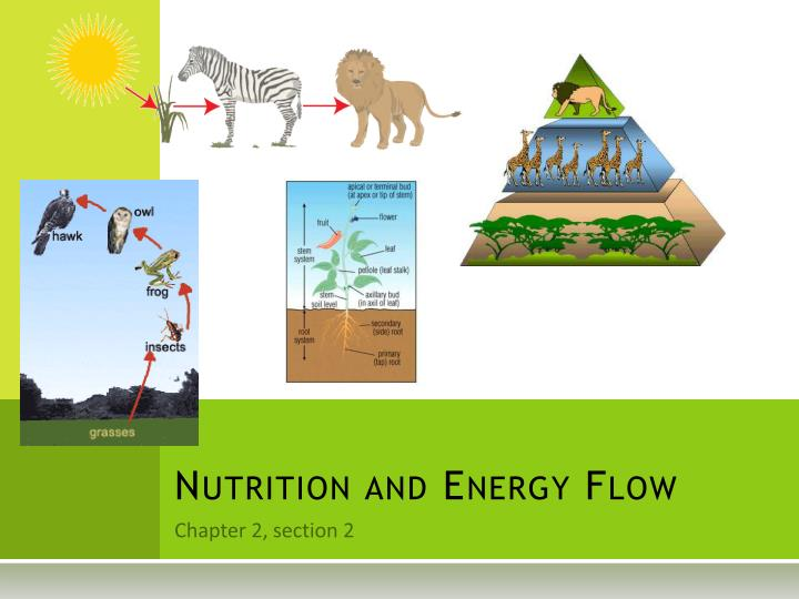 nutrition and energy flow n.
