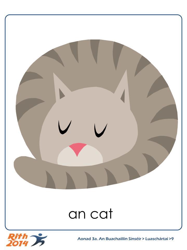 an cat