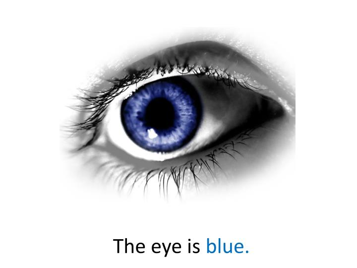 The eye is