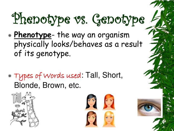Phenotype vs. Genotype