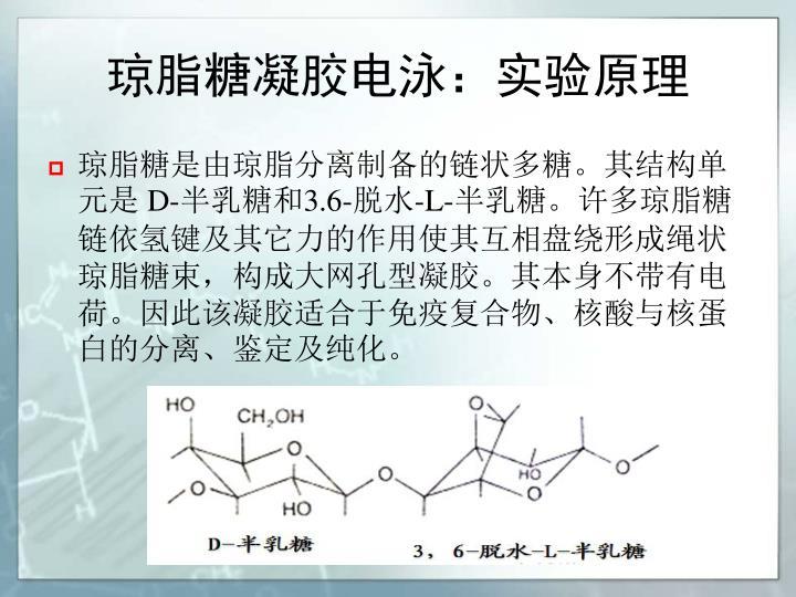 琼脂糖凝胶电泳:实验原理