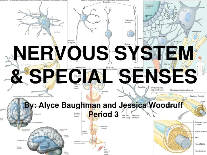 PPT - NERVOUS SYSTEM & SPECIAL SENSES PowerPoint Presentation ...