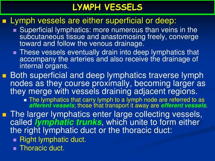 Lymph vessels