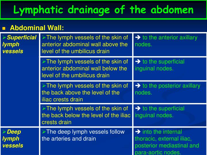Lymphatic drainage of the abdomen