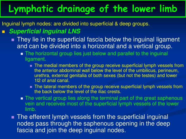 Lymphatic drainage of the lower limb