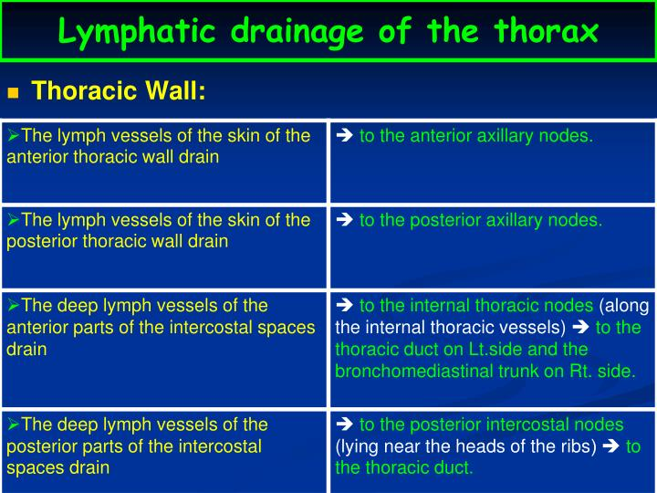 Lymphatic drainage of the thorax