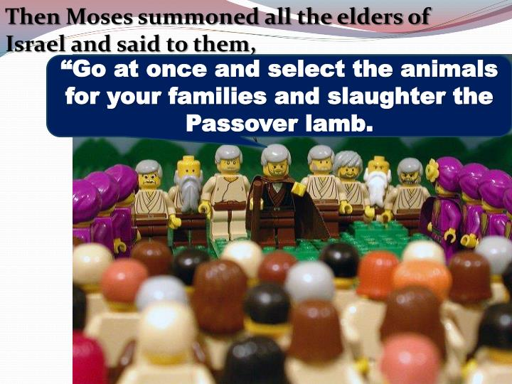 """Go at once and select the animals for your families and slaughter the Passover lamb."