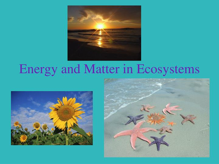 energy and matter in ecosystems n.