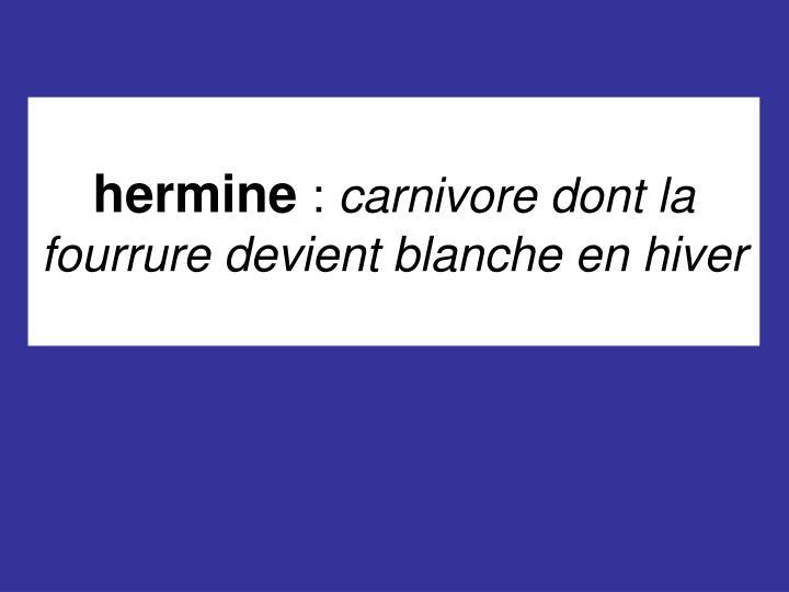 Hermine carnivore dont la fourrure devient blanche en hiver