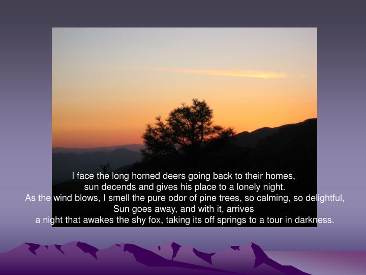 I face the long horned deers going back to their homes,