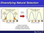 diversifying natural selection