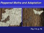 peppered moths and adaptation