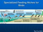 specialized feeding niches for birds