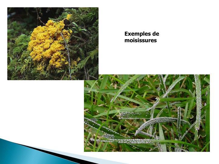 Exemples de moisissures