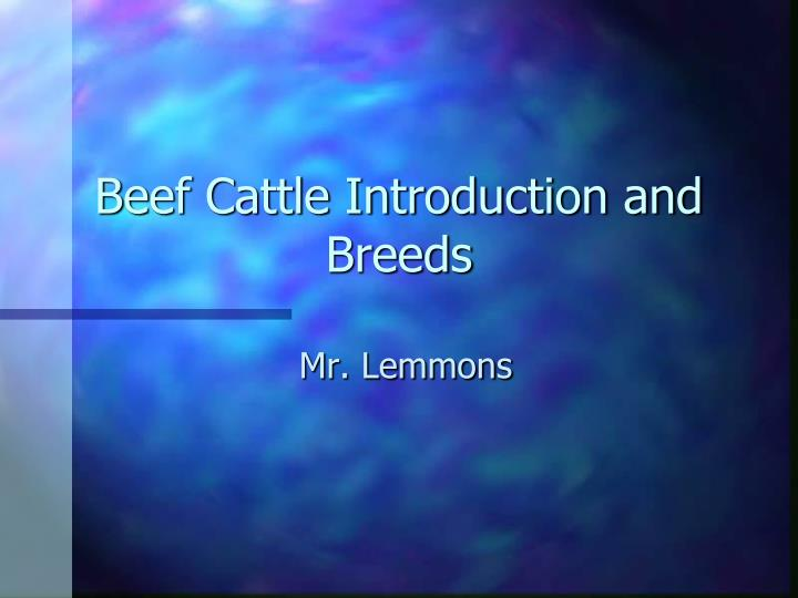 beef cattle introduction and breeds n.