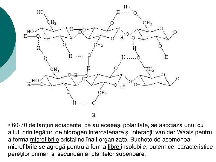 60-70 de lanţuri adiacente, ce au aceeaşi polaritate, se asociază unul cu altul, prin legături de hidrogen intercatenare şi interacţii van der Waals pentru a forma
