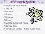 other marsh animals