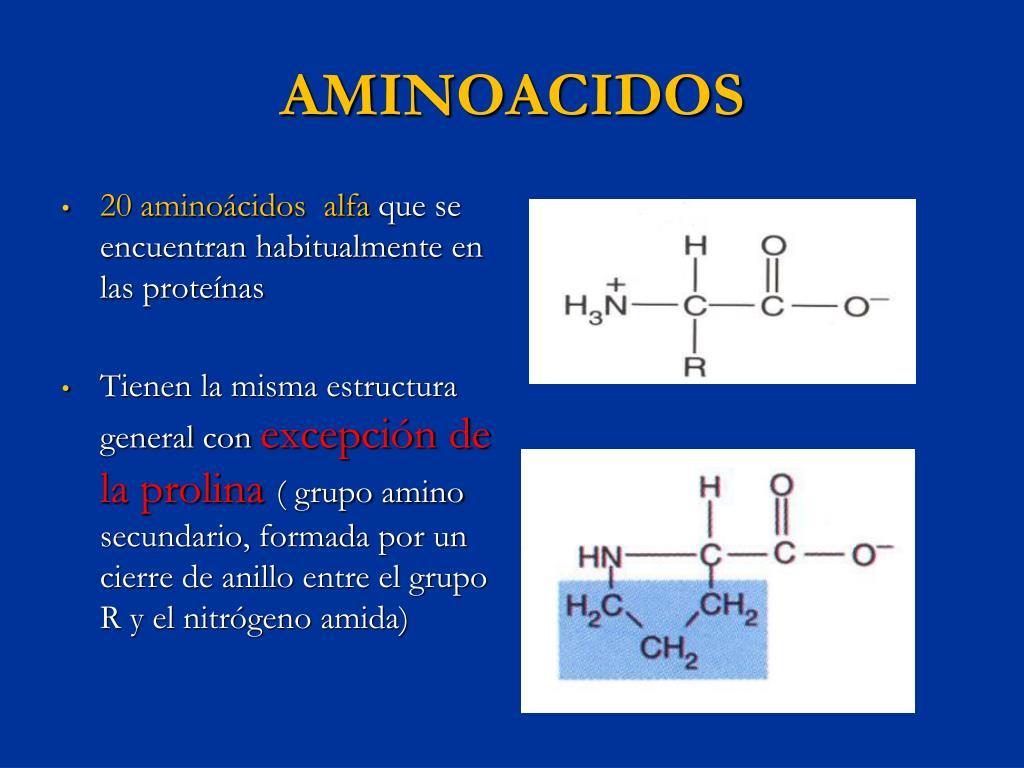 Ppt Biomoleculas Powerpoint Presentation Free Download