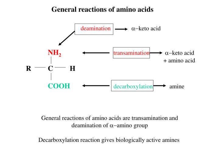 General reactions of amino acids