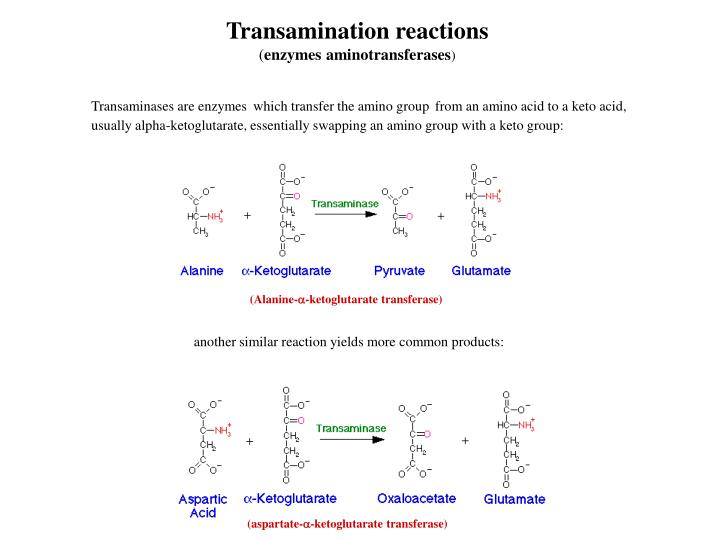 Transamination reactions