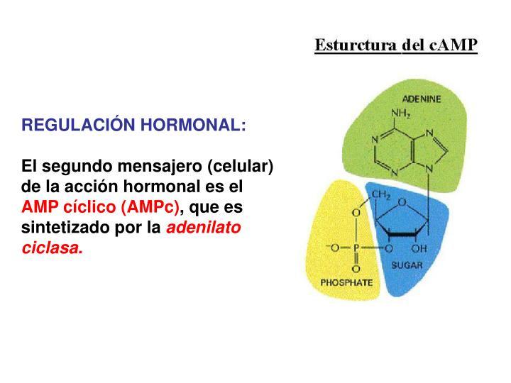 REGULACIÓN HORMONAL: