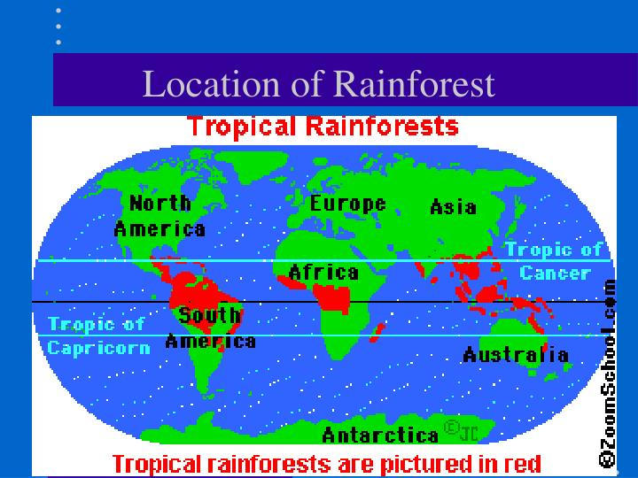 Location of Rainforest