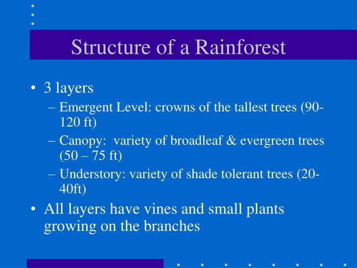 Structure of a Rainforest