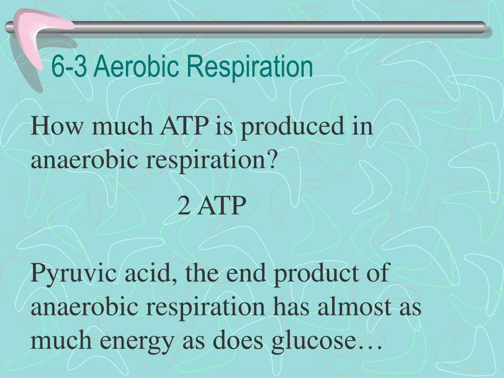 the end product of aerobic respiration