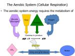 the aerobic system cellular respiration