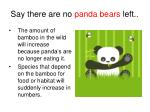 say there are no panda bears left