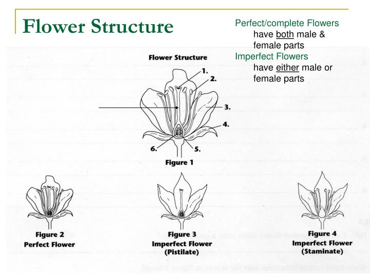 flower structure n ppt seed plants powerpoint presentation id 5461068