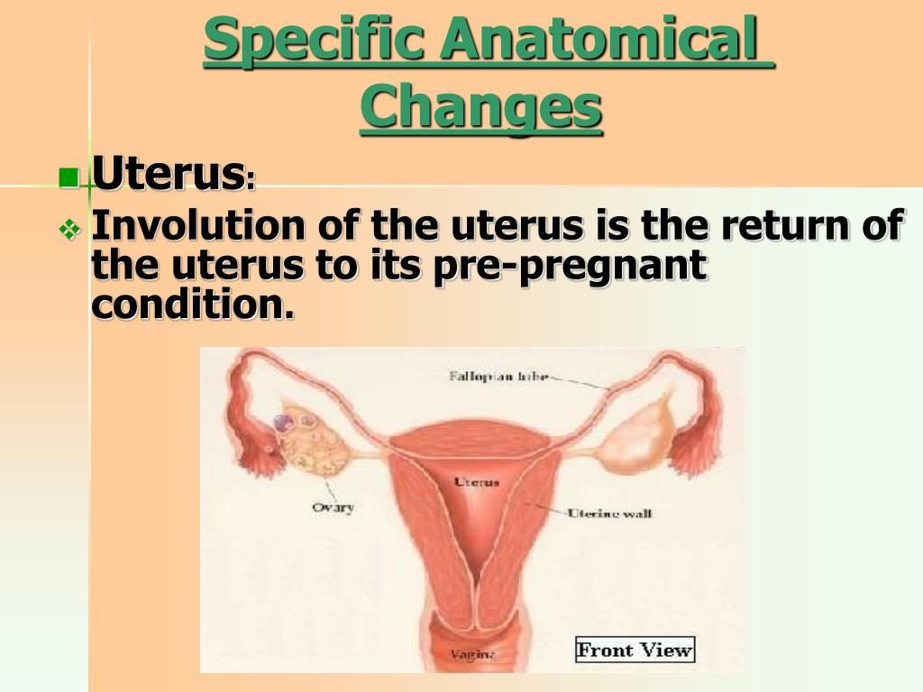PPT - Chapter seven The Normal Postpartum PowerPoint ...