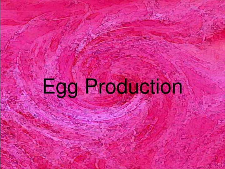 PPT - Egg Production PowerPoint Presentation - ID:5465396