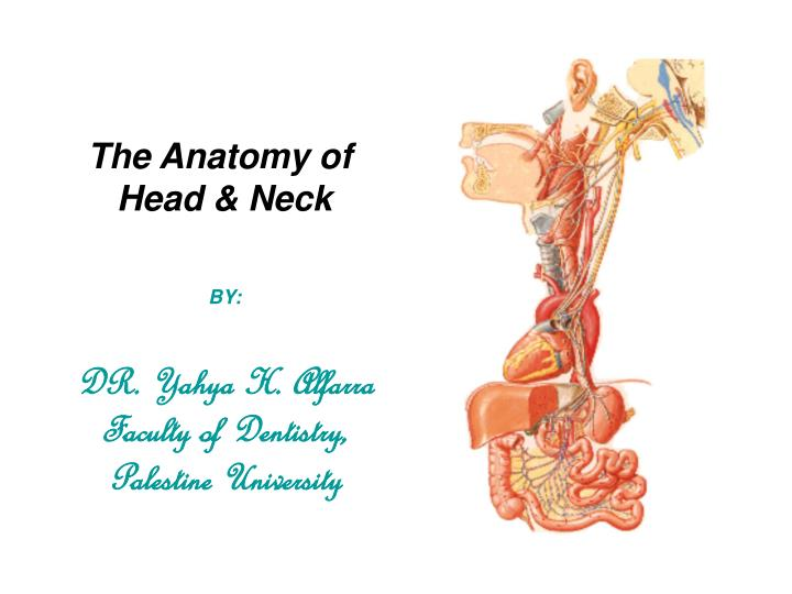 Ppt The Anatomy Of Head Amp Neck By Dr Yahya H Alfarra