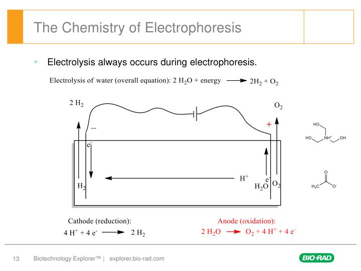 The Chemistry of Electrophoresis