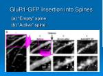 glur1 gfp insertion into spines
