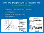 was the tagged ampar functional ca1 pyramidal neurons