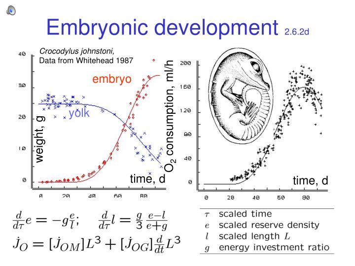 Embryonic development 2 6 2d