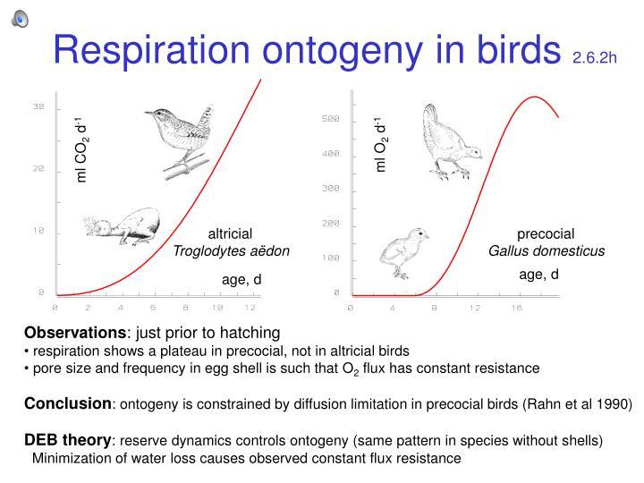 Respiration ontogeny in birds