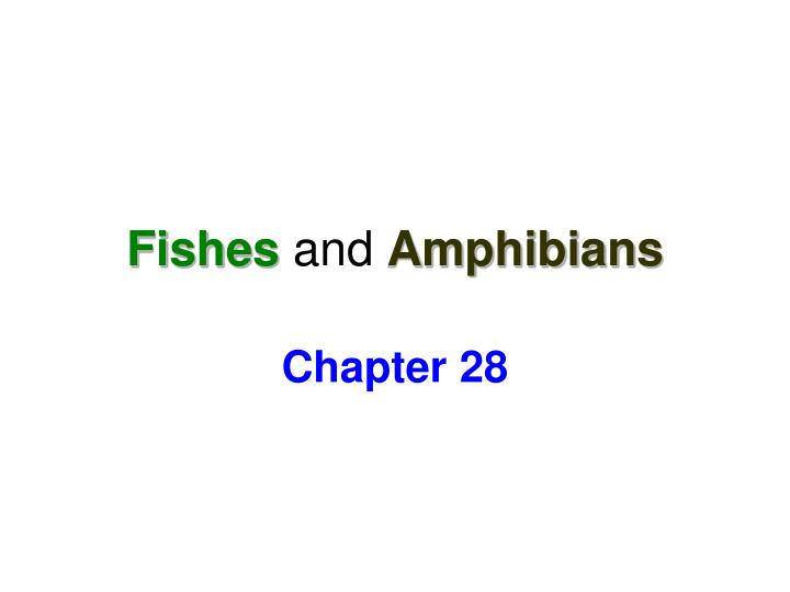 fishes and amphibians n.