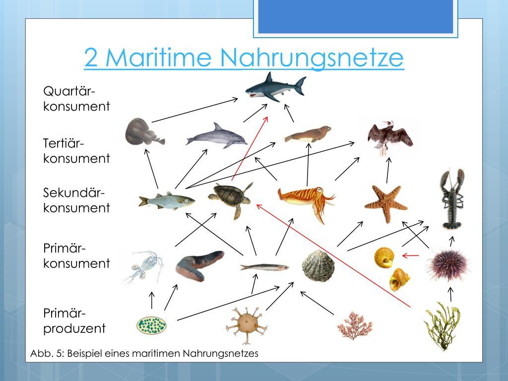 Nahrungsnetz Meer