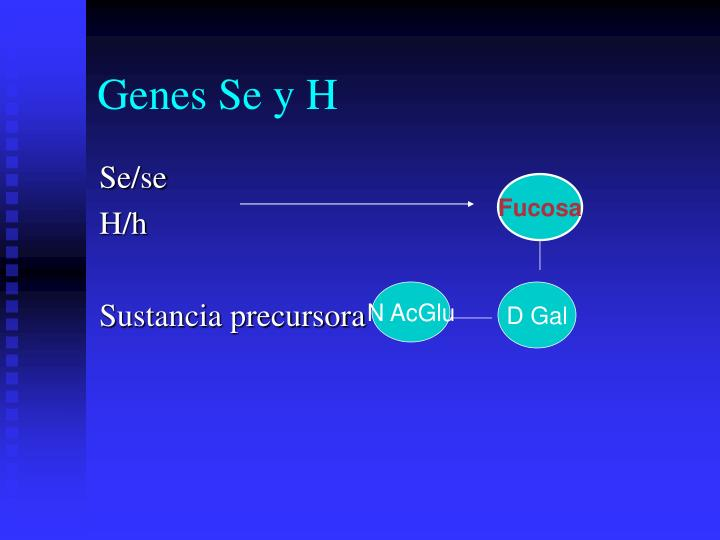 Genes Se y H