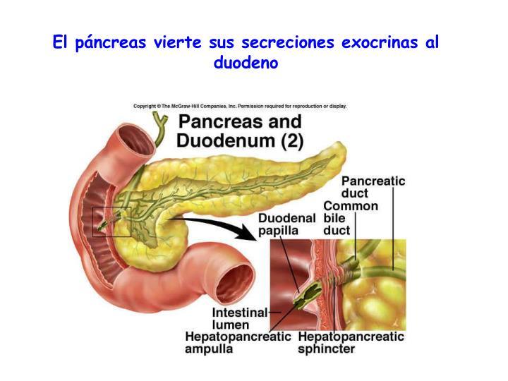 El páncreas vierte sus secreciones exocrinas al duodeno