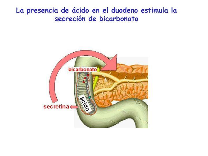 La presencia de ácido en el duodeno estimula la secreción de bicarbonato