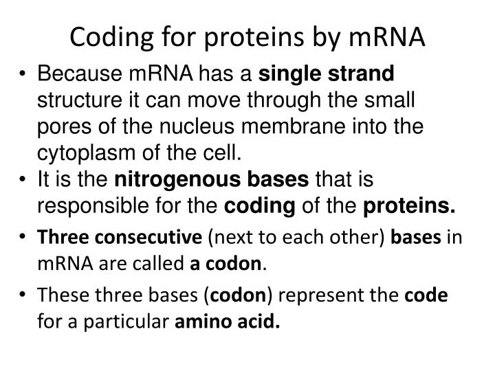 Coding for proteins by mRNA