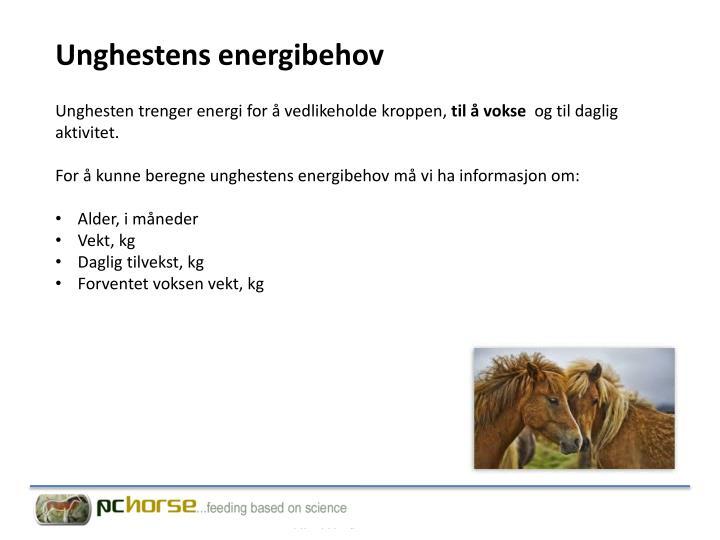 Unghesten trenger energi for å vedlikeholde kroppen,